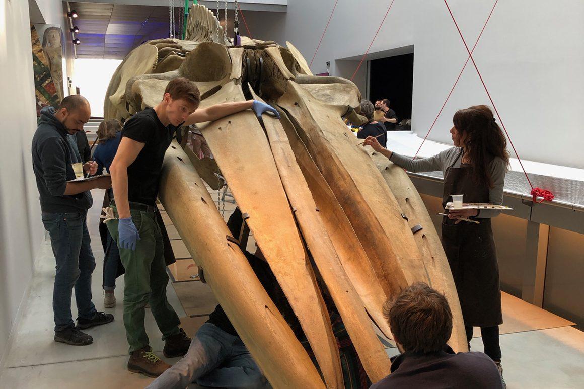 Musée des Confluences - Whale 1